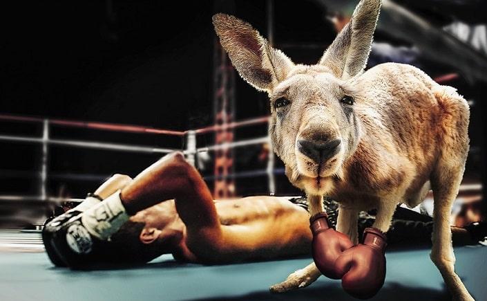 Ставки на нестандартные исходы в боксе